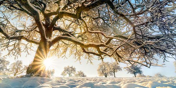 winter_magic